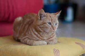 My cat Capuchon